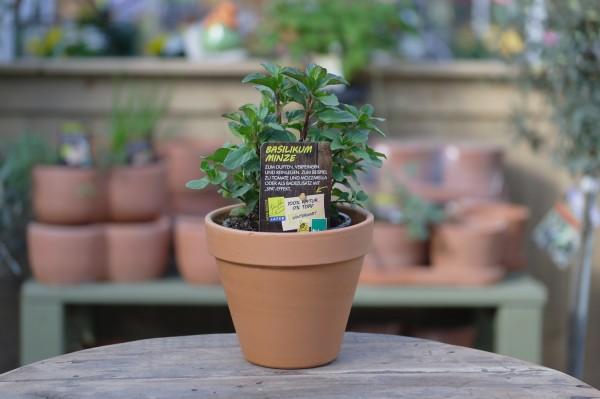 LA'BIO! Basilikum-Minze - Mentha piperita 'Basil' (13cm Topf)