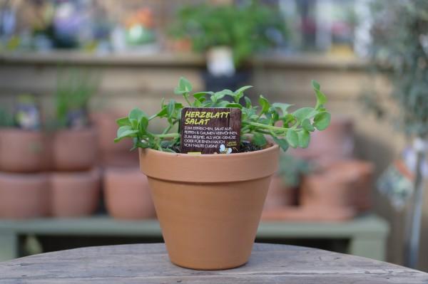 LA'BIO! Herzblattsalat - Aptenia cordifolia (13cm Topf)
