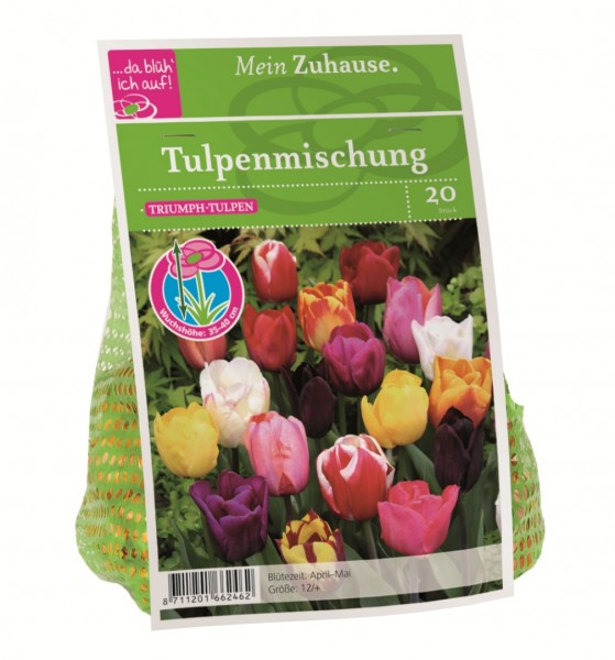 da blüh' ich auf Tulpen Triumph-Mischung - 20 Blumenzwiebeln (12 cm)