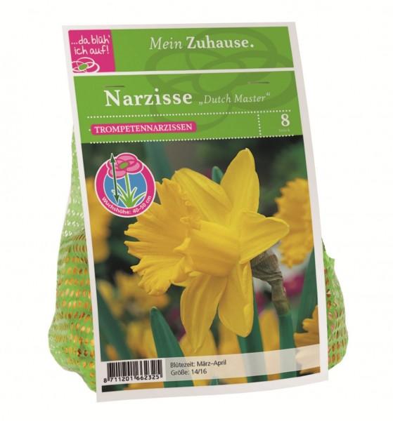 da blüh' ich auf Narzisse 'Dutch Master' gelb - 8 Blumenziebeln (14/16cm)
