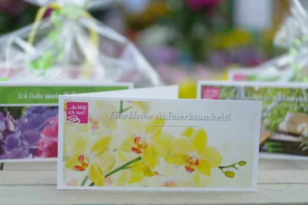 Geschenkgutschein 30€ für die Landgärtnerei Beier - Motiv: Gelbe Orchidee