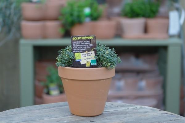 LA'BIO! Goldthymian - Thymus citriodorus variegata (13cm Topf)