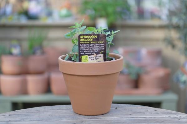 LA'BIO! Aprikosenmelisse - Agastache aurantiaca (13cm Topf)