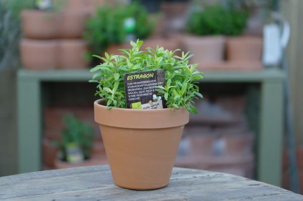 LA'BIO! Estragon - Artemisia dracunculus (13cm Topf)