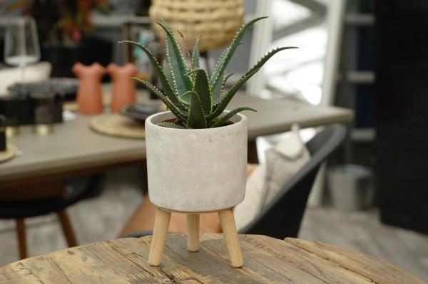 Aloe 'Jurassic Dragon' - Aloe aculeata (10,5cm Topf, ca. 15cm Höhe inkl. Kulturtopf)