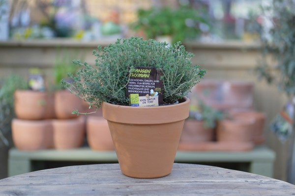LA'BIO! Orangenthymian - Thymus fragrantissimus (13cm Topf)
