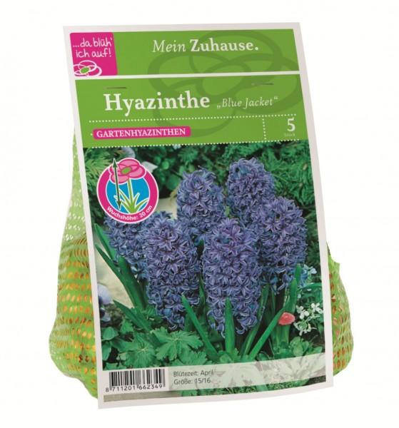 da blüh' ich auf Hyazinthe 'Blue Jacket' blau - 5 Blumenzwiebeln (15/16cm)