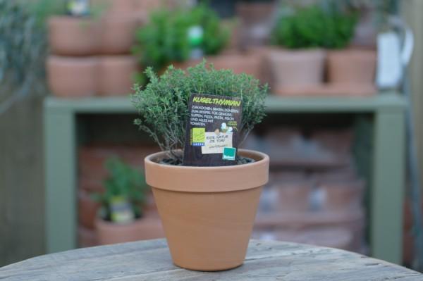 LA'BIO! Kugelthymian - Thymus vulgaris 'Compactus' (13cm Topf)
