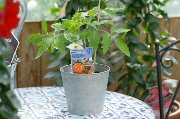 Ochsenherz-Tomate 'Corazon F1' - Lycopersicon esculentum (12cm Topf)