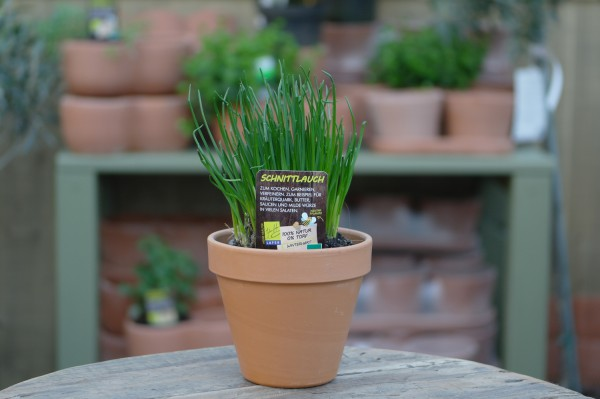LA'BIO! Schnittlauch - Allium schoenoprasum (13cm Topf)