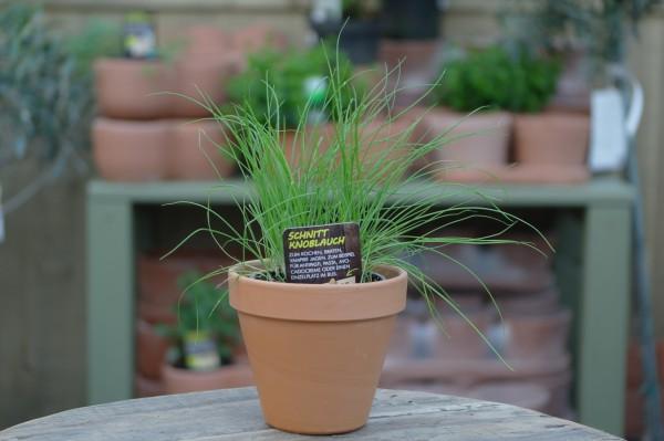 LA'BIO! Schnittknoblauch - Allium tuberosum (13cm Topf)