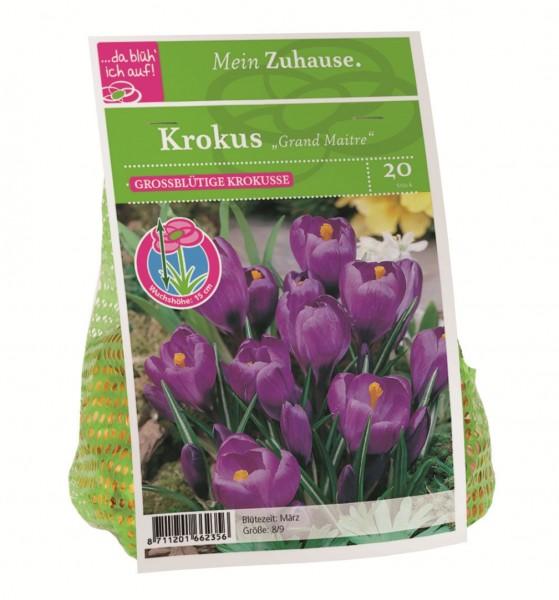 da blüh' ich auf Krokus 'Grand Maitre' blau - 20 Blumenzwiebeln (8/9cm)