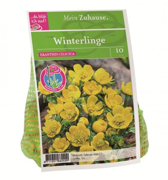 da blüh' ich auf Winterlinge gelb - 10 Blumenzwiebeln Eranthis cilicia (5cm)