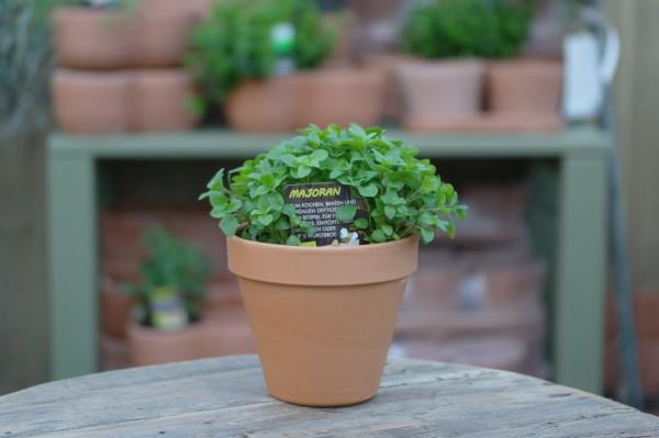 LA'BIO! Majoran - Majorana hortensis (13cm Topf)