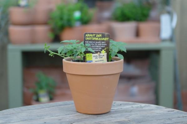 LA'BIO! Kraut der Unsterblichkeit - Gynostemma pentaphyllum (13cm Topf)