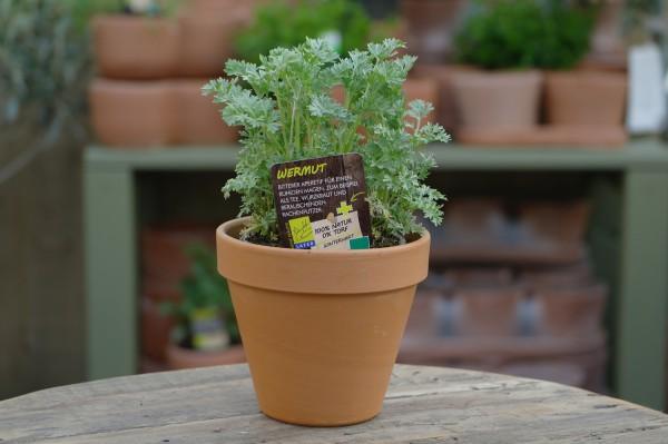 LA'BIO! Wermut - Artemisia absinthium (13cm Topf)