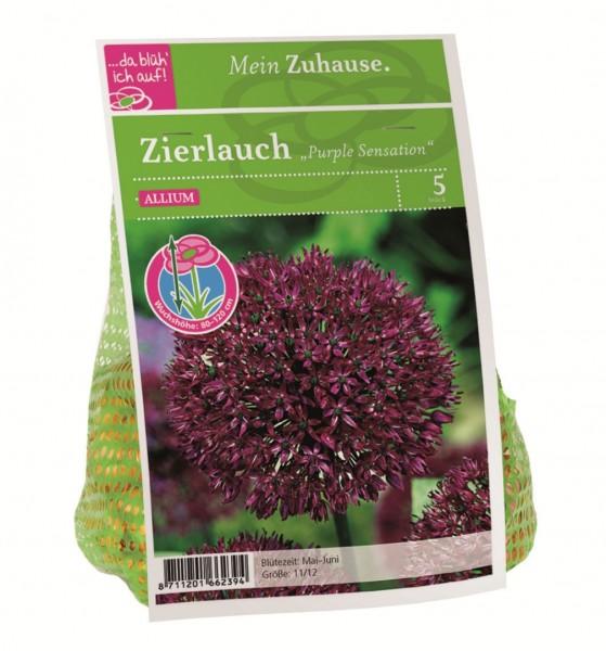 da blüh' ich auf Allium 'Purple Sensation' purpur - 5 Blumenzwiebeln (11/12cm)