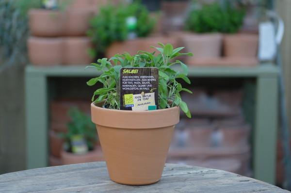 LA'BIO! Salbei - Salvia officinalis (13cm Topf)