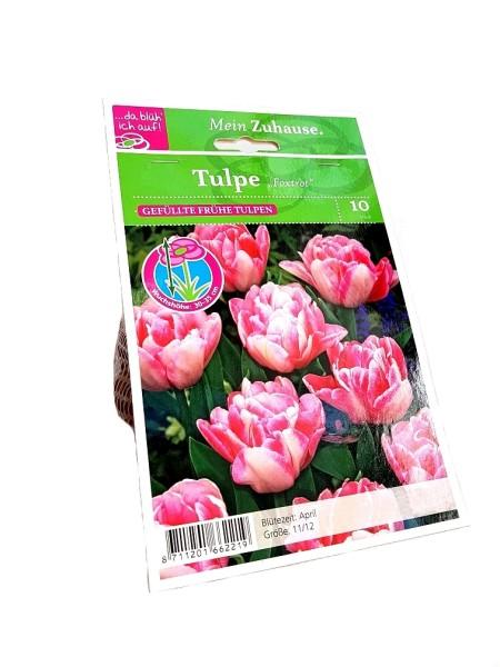 da blüh' ich auf Tulpen 'Foxtrot' rosa-weiß - 10 Blumenzwiebeln (11/12cm)